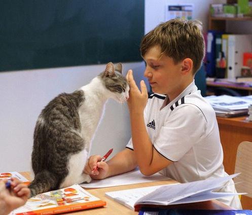 pédagogie candide chats ronronthérapie