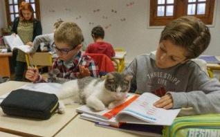 Groupe Scolaire Candide : pédagogie innovante et ronronthérapie