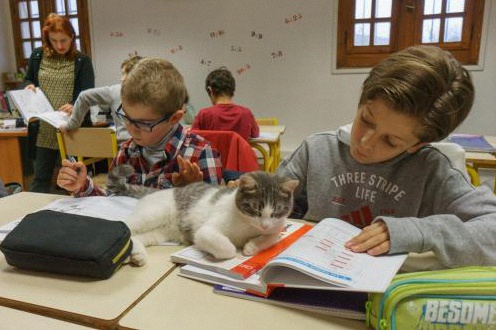 groupe scolaire candide